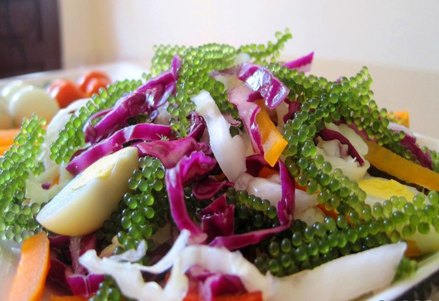 Salad rong nho biển